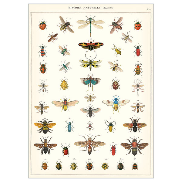 Insect Series Poster Wall Hanging