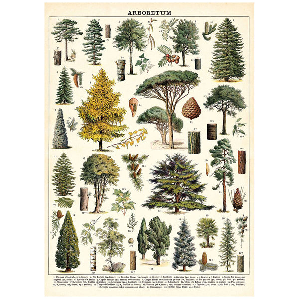 Tree Species Poster Wall Hanging