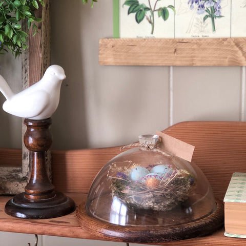 Bird Nest Cloche