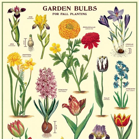 Garden Bulbs Wall Print