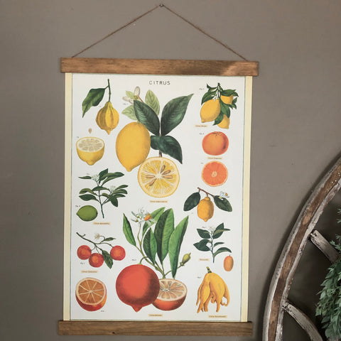 Lemon and Citrus Poster