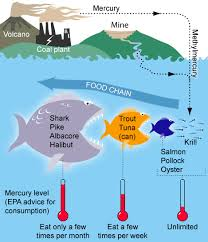 The 7 Biggest Threats to Our Oceans: Threat #5 Mercury Pollution in our Oceans