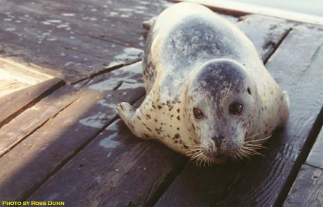 My Conversation with a Seal