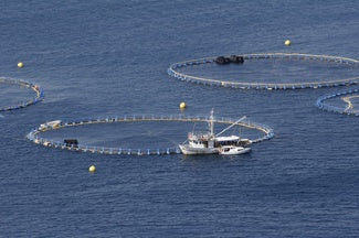 Commercial fishing tuna pens