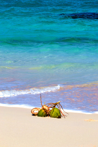 Long Island Coconuts The Bahamas Art Print