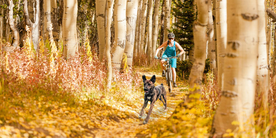 Of Trails and Tails: A First-Timer's Guide to Biking with Your Dog