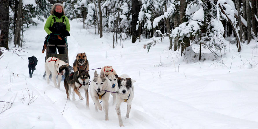 An Interview with Dogsledder Julie Buckles