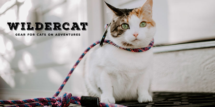 Introducing... WILDERCAT!