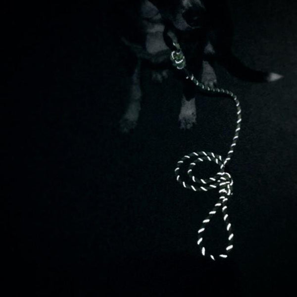 Razzleberry Reflective Small Carabiner Leash