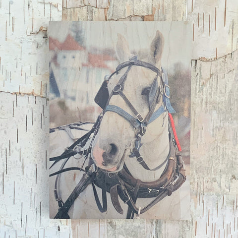 White Horse 5x7 By Kate Rise