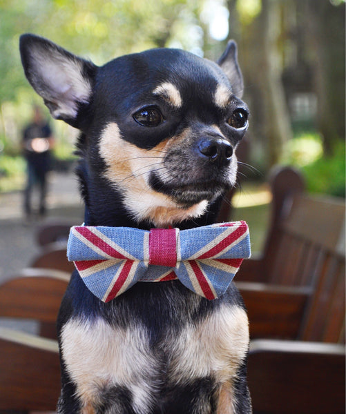UNION JACK DOG BOW TIE COLLAR