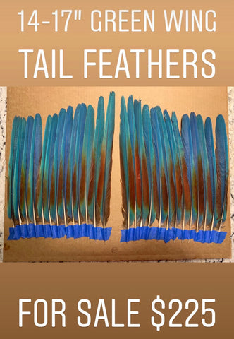 Aztec Dance Macaw Feather set 2