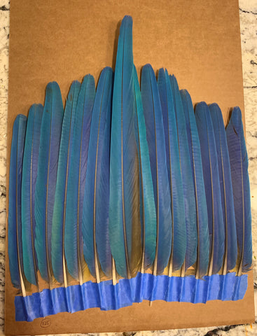 Aztec Dance Macaw Feathers