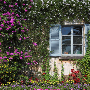 Wall and window with flowers in decorative park on island Izola Bella Backdrop