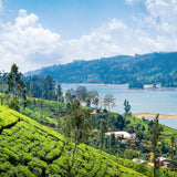Tea Plantation Near Nuwara Eliya In Sri Lanka