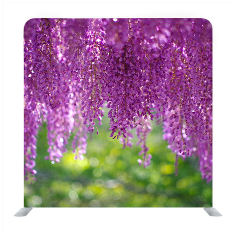 A wisteria flower in full bloom with a refreshing scent Backdrop