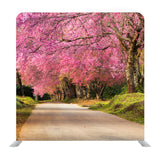 Full Pink Cherry Blossom On Spring In The Morning At North Of Thailand Background Media Wall