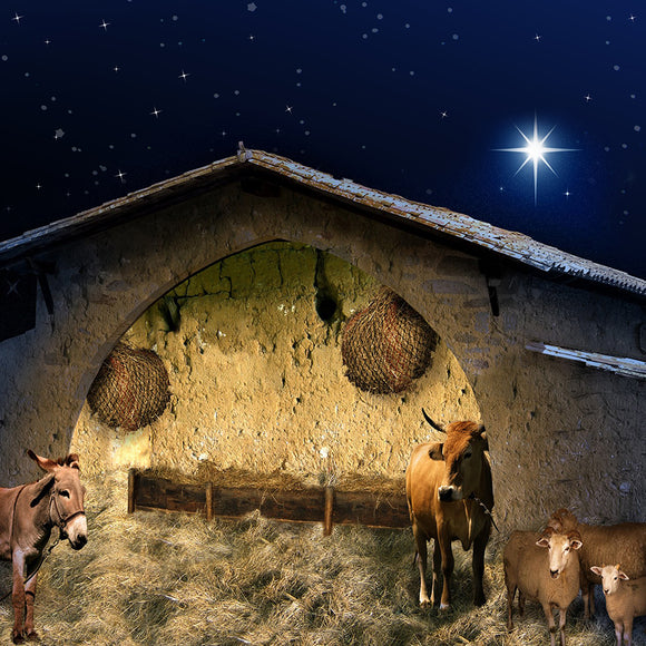Christmas Stable  Backdrop