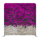 Violet Bougainville Flowers Blooming On Rock Wall Background Media Wall