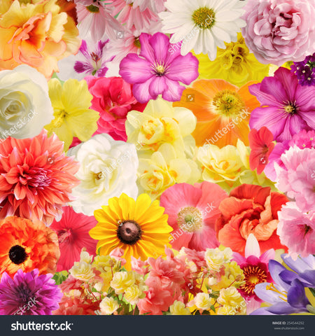 Digital Painting of Colourful Floral Print Photography Backdrop