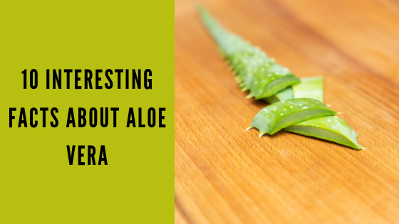 10 Interesting Facts about Aloe Vera