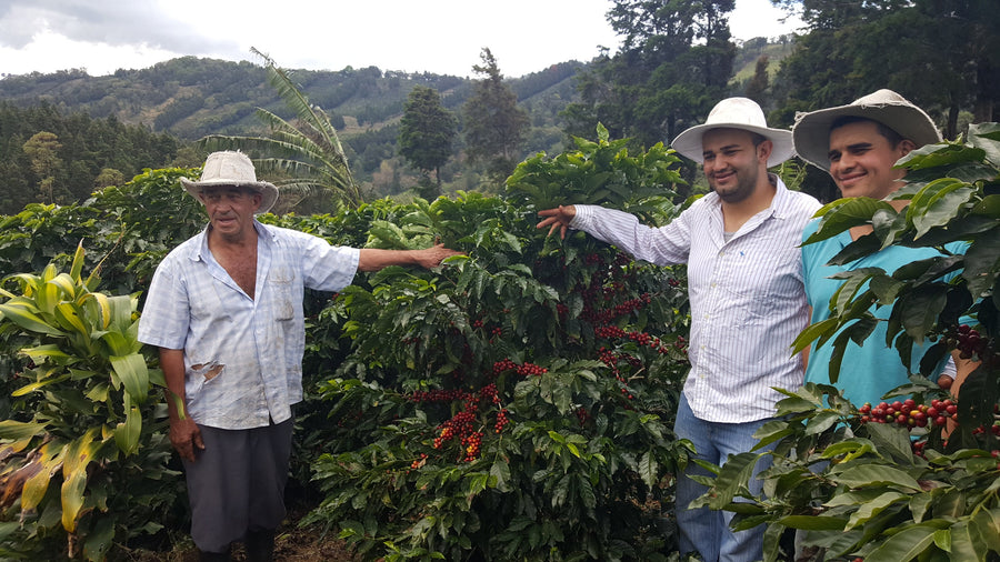 Costa Rica Los Robles - Django Coffee Co.
