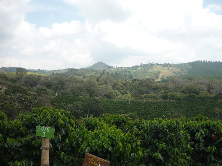 Colombia Popayan - Django Coffee Co.