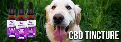 Medterra CBD for pets
