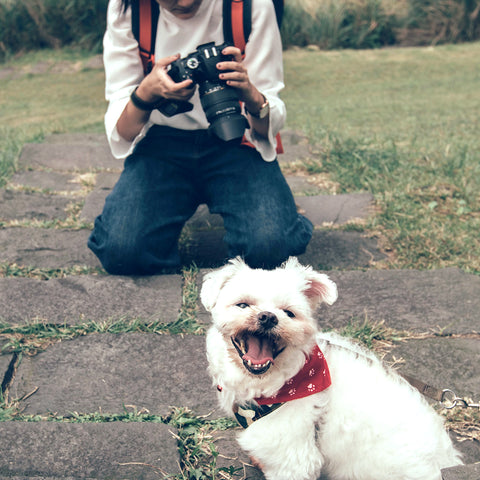 dog with person taking photo