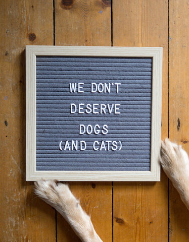 we don't deserve dogs and cats letter board