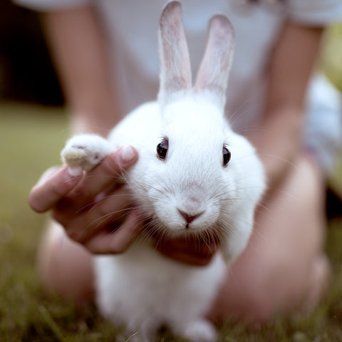 bunny waving with paw