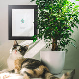 cat sitting on table with paw print artwork and plant