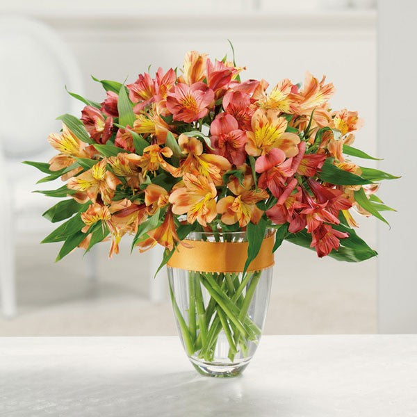 Awesome Alstroemeria