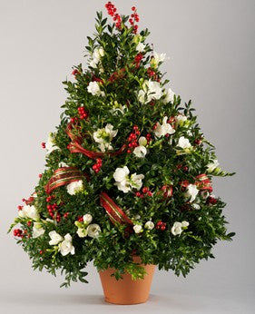 Boxwood Christmas