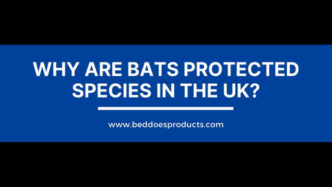Why Are Bats Protected Species In The UK