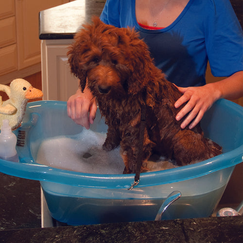 Pup-Tub, Ocean Blue