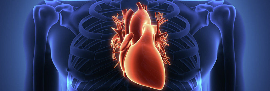 IGF-1 Could Help Promote Heart Health