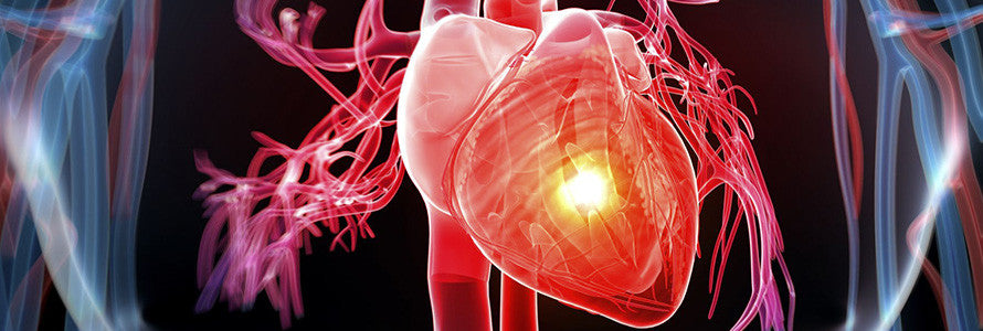 IGF-1 Can help With Heart Function