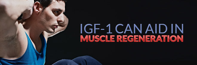 IGF-1 Can Aid In Muscle Regeneration