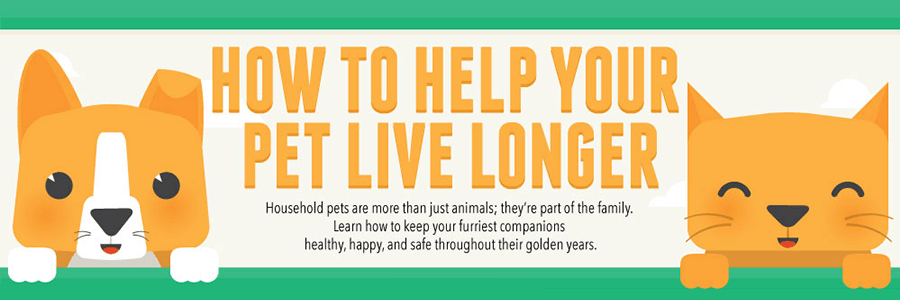How To Help Your Pet Live Longer