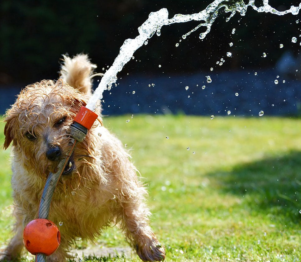 Keep Your Dog Cool This Summer!