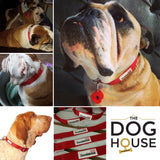 Red Doodlebone Collar