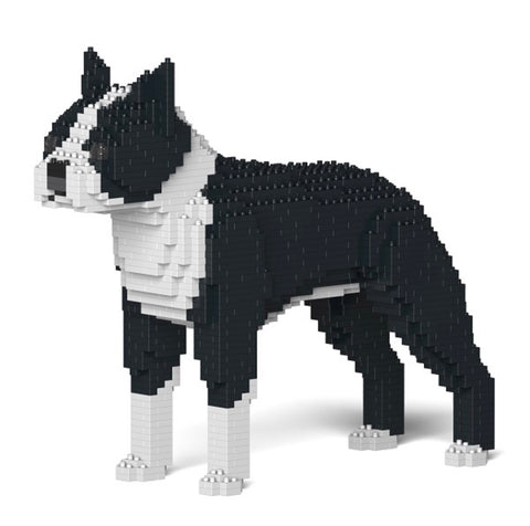 Boston Terrier Jekca