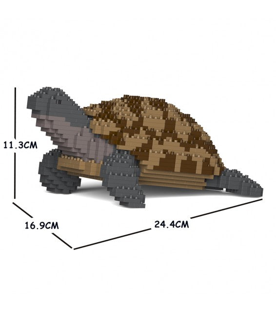 Greek Tortoise Jekca