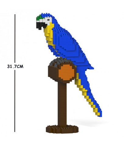 Blue & Gold Macaw Jekca
