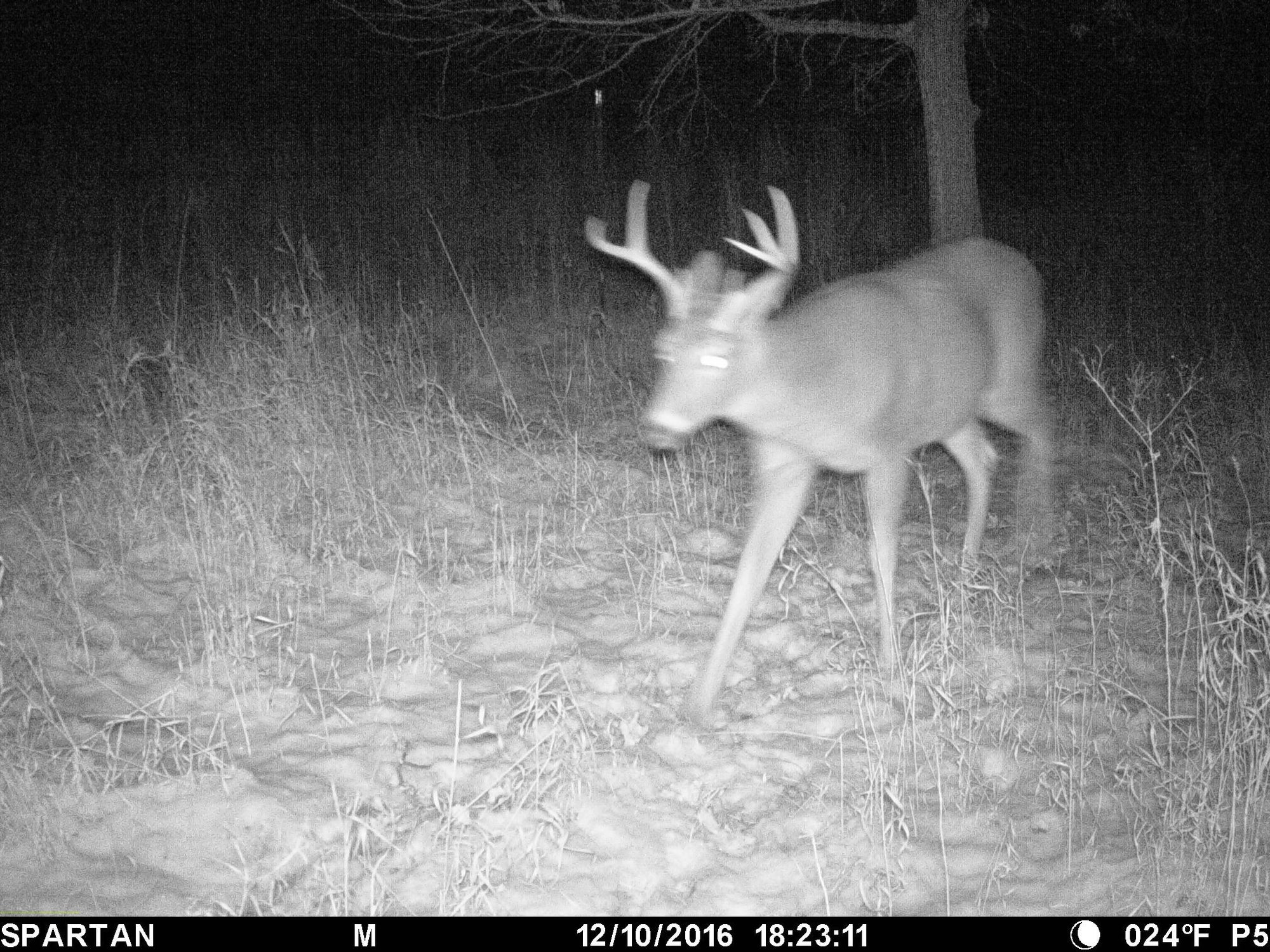 Year in Review | HCO Trail Cameras