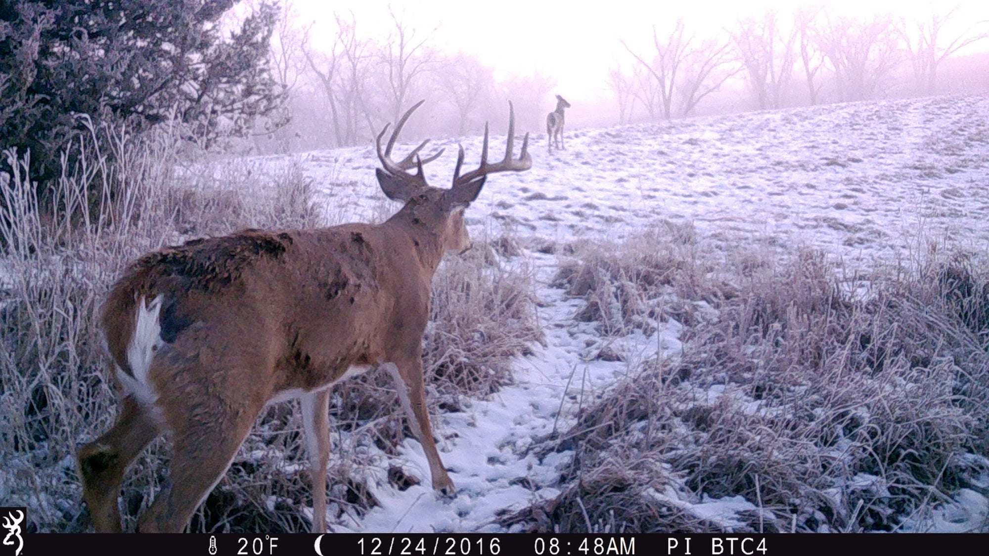 Year in Review | Browning Trail Cameras