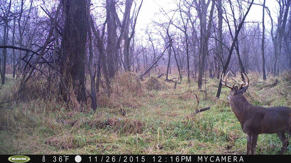 Year in Review | Moultrie Game Cameras