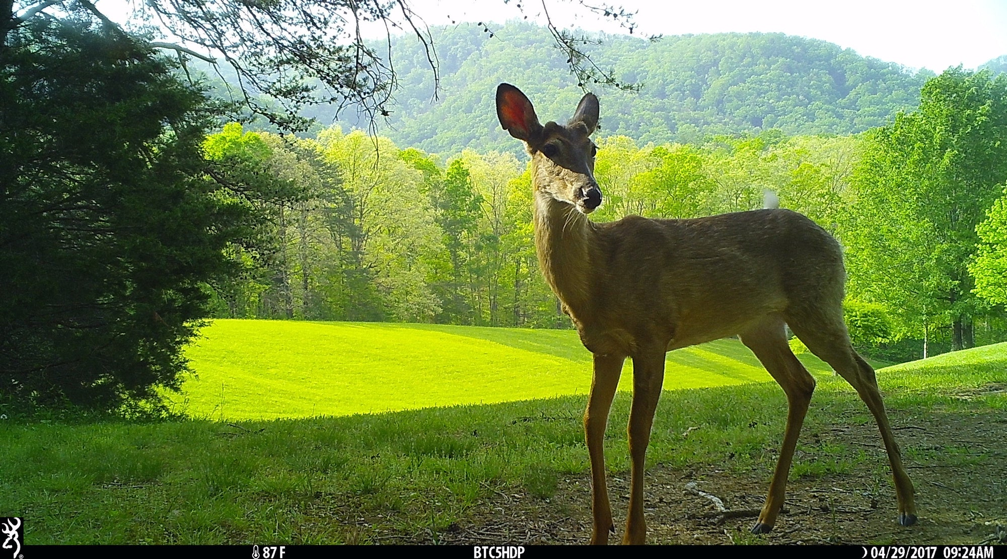 Using Mineral Licks with Trailcams