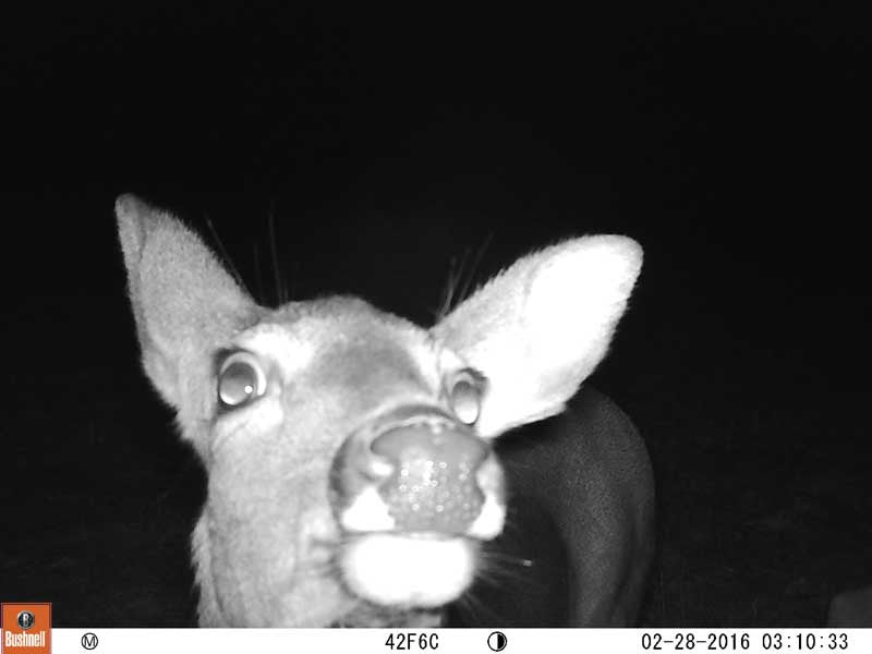 Year in Review | Bushnell Trail Cameras